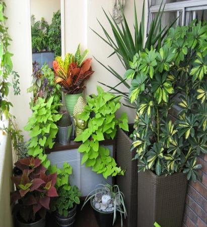 plante aromatice in ghiveci